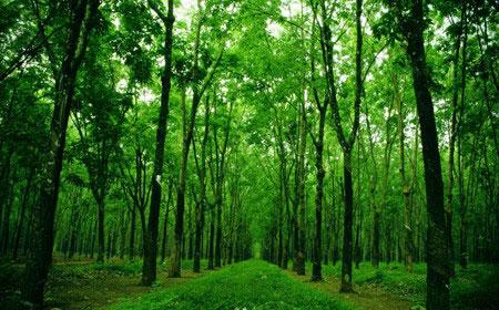 Hiện trạng tài nguyên gỗ tự nhiên khan hiếm và hạn hẹp ở Việt Nam, thế giới