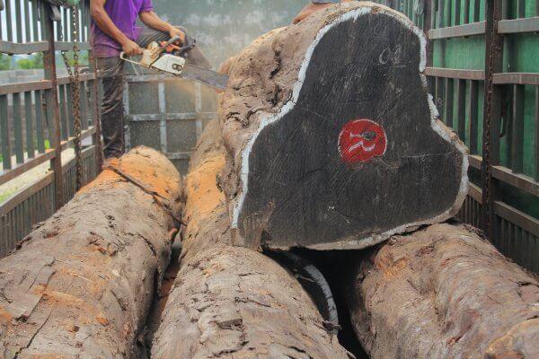 Giá gỗ Cẩm: Tăng mạnh giai đoạn cuối năm 2018